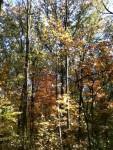 Walk In The Woods 10