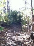 Walk In The Woods 11