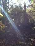 Walk In The Woods 12