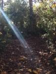 Walk In The Woods 13
