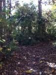 Walk In The Woods 14