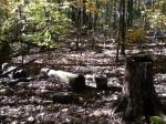 Walk In The Woods 6