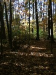 Walk In The Woods 9